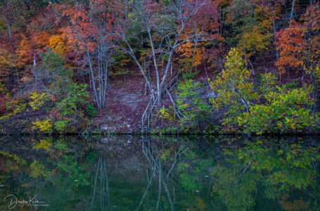 Fall in love with the Ozarks.